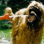 hund_zaehne_popup